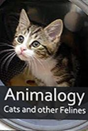 Animalogy: Cats and Other Felines