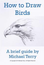 How to Draw Birds: A Brief Guide