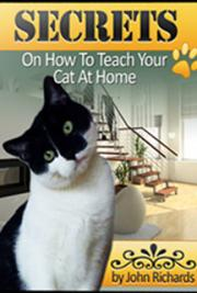 Secrets on How to Teach Your Cat at Home