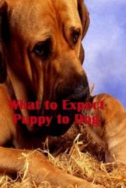 What to Expect - Puppy to Dog