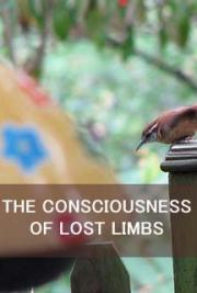 The Consciousness of Lost Limbs