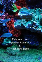 Saltwater Aquarium and Reef Tank Book