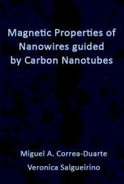 Magnetic Properties of Nanowires Guided by Carbon Nanotubes