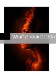 What is your Destiny