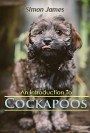 An Introduction To Cockapoos